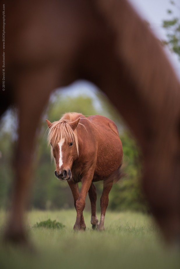 Wild Horses by DavidMBuckwalter - Farms And Barns Animals Photo Contest