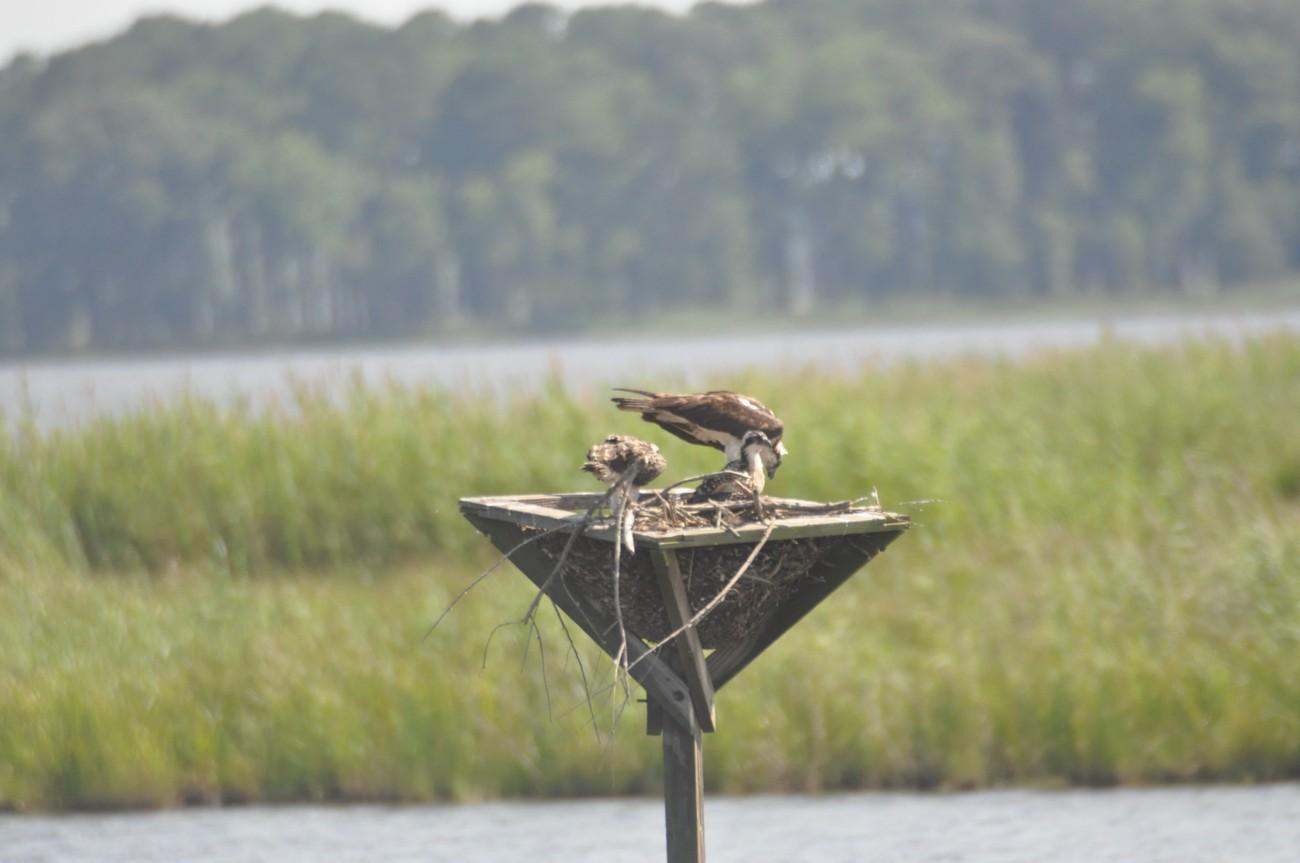 Blackwater National Wildlife Refuge Cambridge, Maryland