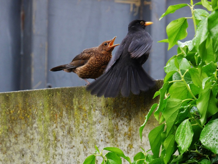 """I think this is what father black bird will tell to his young """"nothing more to eat&q..."""