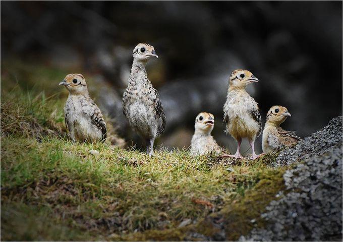 Where's Mum ? by malcolmmcbeath - Wildlife Photo Contest 2017