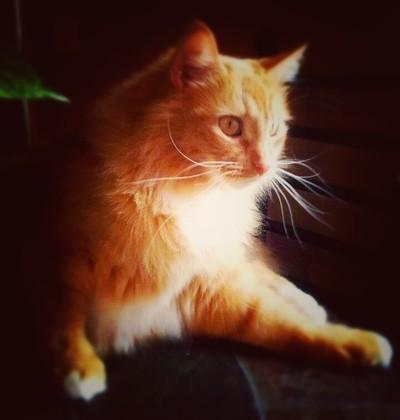 My Ginger Kitty - Butter