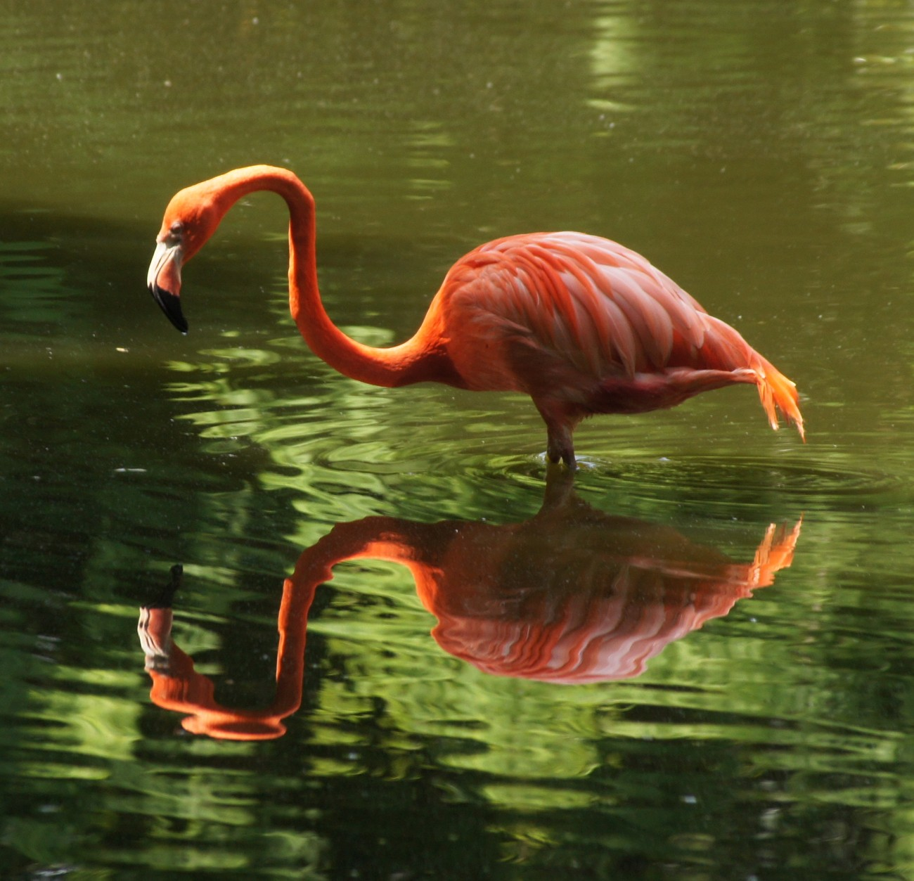 Lovely Pink Flamingo.
