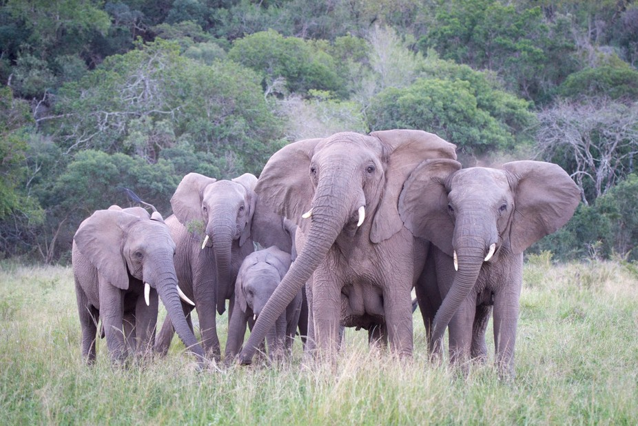The elephants thought we were a little too close to their little ones!