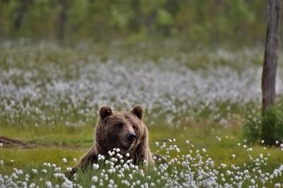 smiling brown bear
