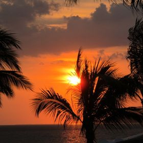 Mexican Sunset with Palm Trees