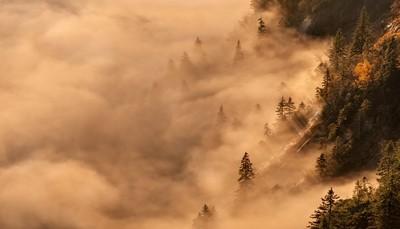 Misty morning...what else :)
