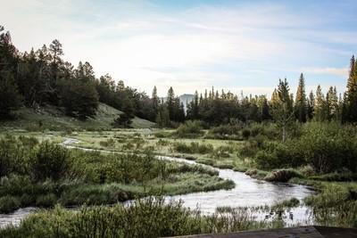 Rocky Mountain Marshland