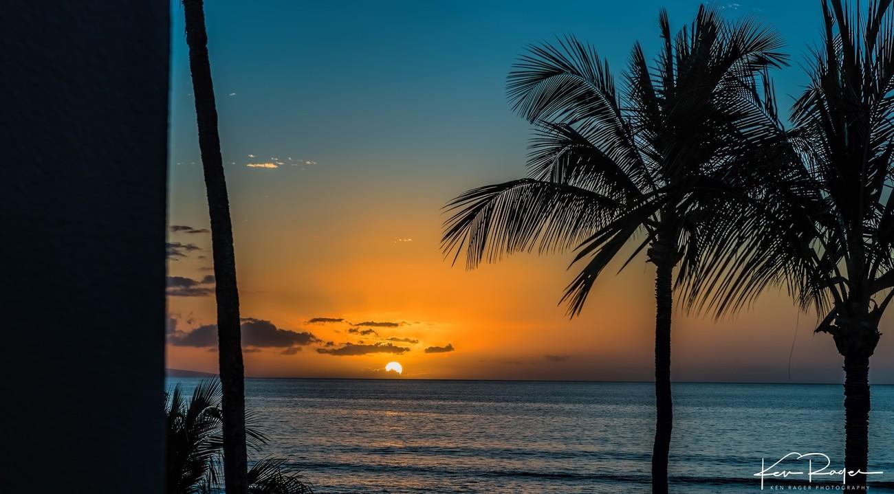 Sunset Palms-1