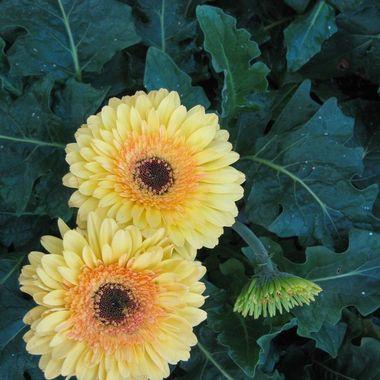 Longwood Gardens flowers