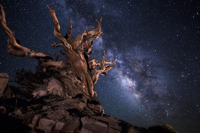 Bristlecone by aaronmmoshier - A Low Vantage Point Photo Contest
