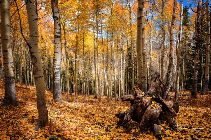 Fall in the Forest by Truc_Nguyen - Covers Photo Contest Vol 41