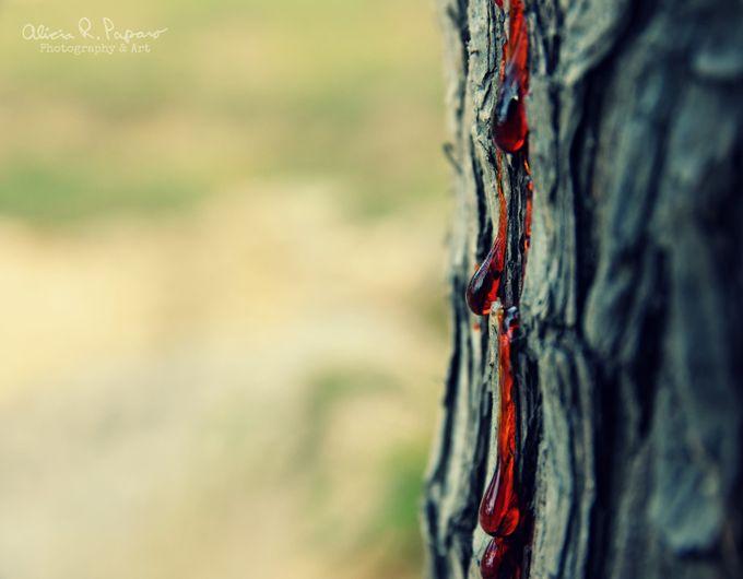 The Bleeding Tree by AliciaRPaparo - Celebrating Earth Day Photo Contest 2019