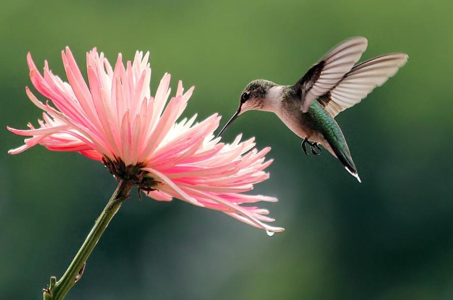 Yep, this kinda happened today!  :-) Female Ruby Throated Hummingbird Forest, VA