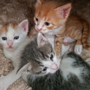 I took this photo when these kittens were about a month old.