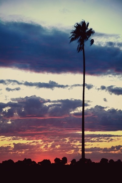 Winter sunset with palm