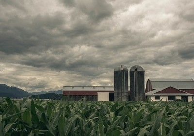 Rural skies