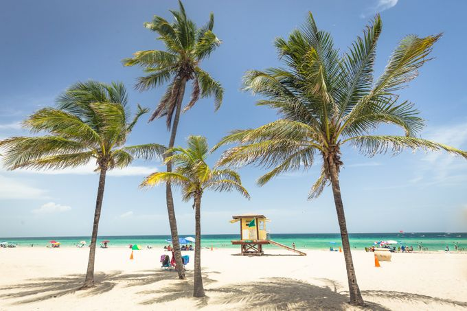 hollywood beach by davidgrachek - Palm Trees Photo Contest