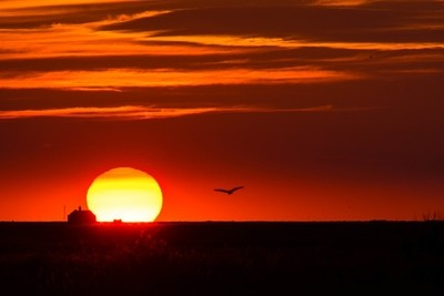 Sunset with Gull