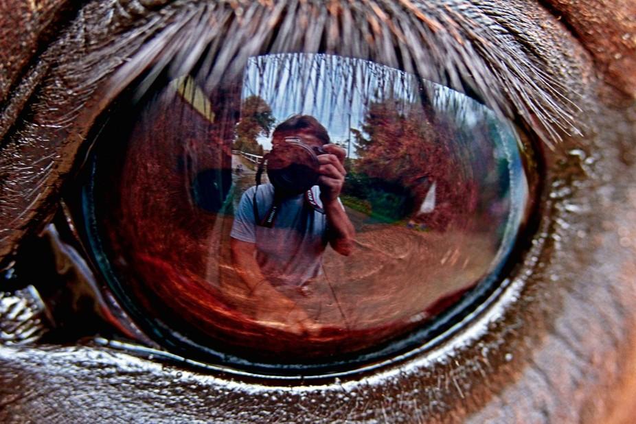 Horse eye selfie