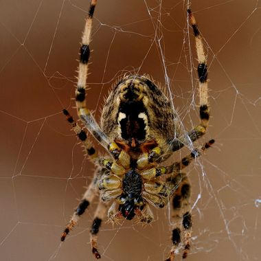 after strong winds this spider is busy fixing his web