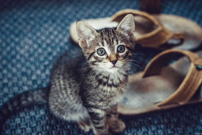 Nola by aruther - Cute Kittens Photo Contest