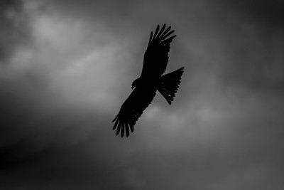 Twilight Bird