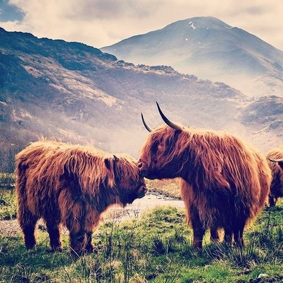 #highlandcow #redhead #scotland_insta #scotland #pictureoftheday #picoftheda