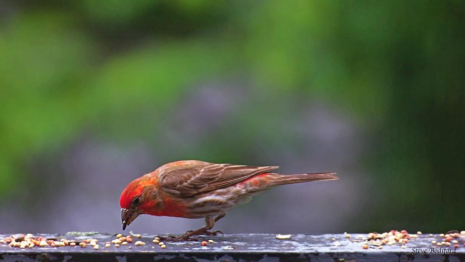 %22If even a Sparrow falls…%22