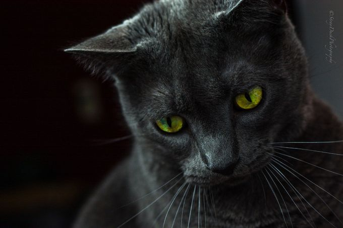 mywork-5 by daniellemtravers - Feline Beauty Photo Contest