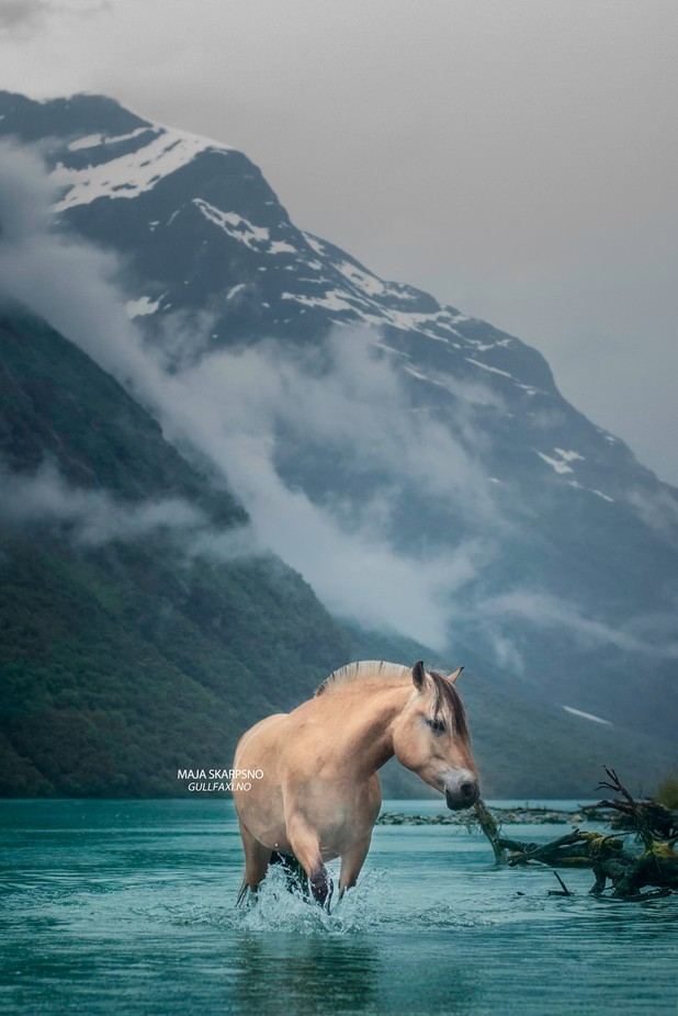 The Misty Mountains Cold  by gullfaxi - Animals And Water Photo Contest