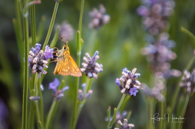 Moth by rogerhampton - Bright Colors In Nature Photo Contest