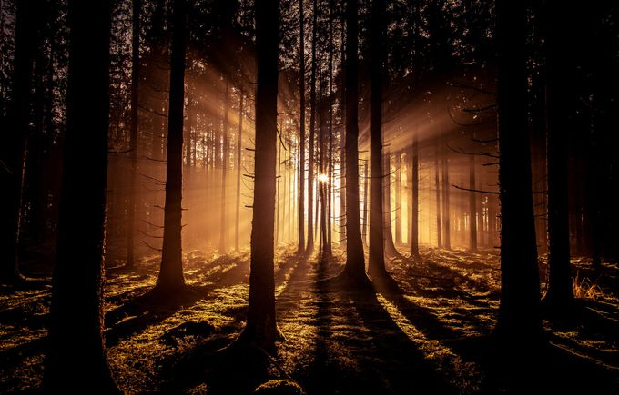 DER WALD 2 by LS_PIX - Covers Photo Contest Vol 40