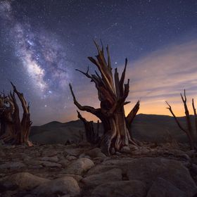 The Milky Way, the moon and Bristlecone pines.