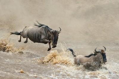 Masai Mara 20130001-101670