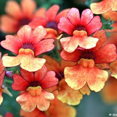 Orange Summer Beauty www.just4joy.com