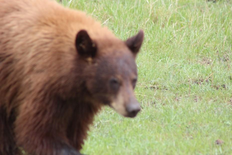 bear 2016 018