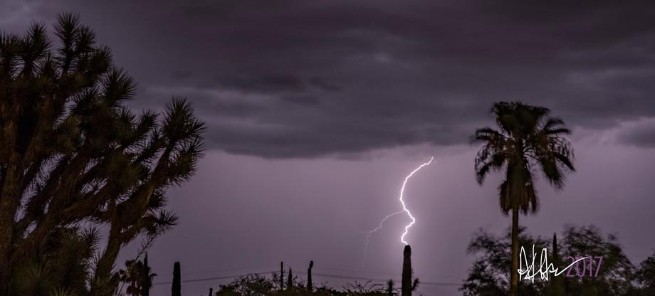 saguaro connection - it's monsoon season in Arizona!
