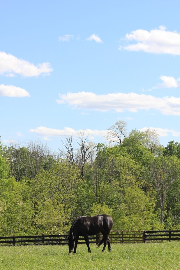 """""""Grazing."""" This photo I took a couple of months ago on a windy, beautiful day w..."""