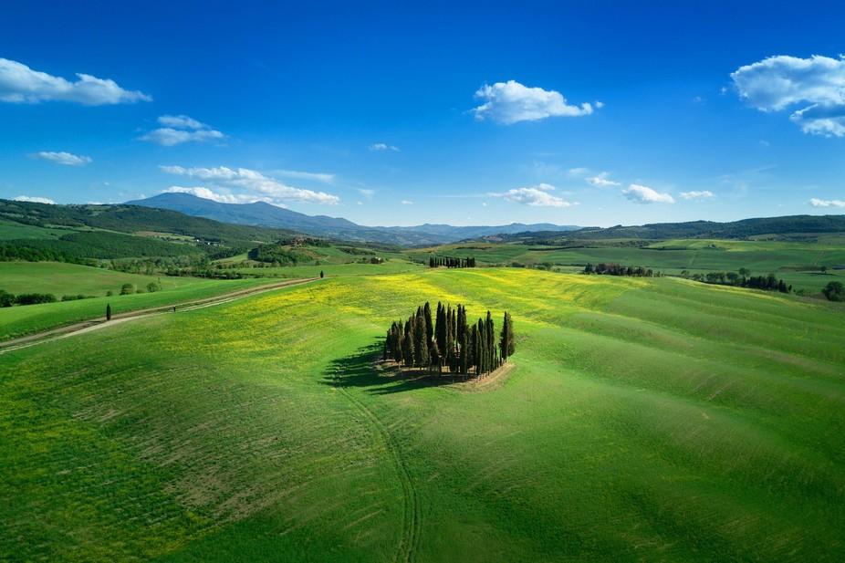 Location: Cipressi di San Quirico d'Orcia. Sub Location: Valdorcia, Tuscany Country: Ita...