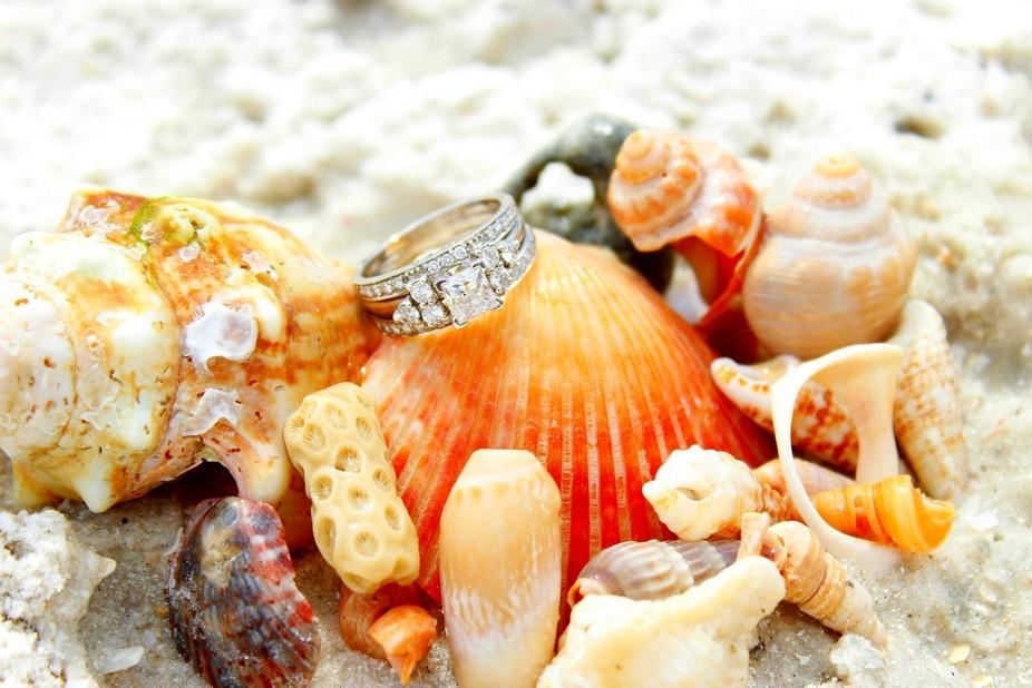 Beauty in a shell