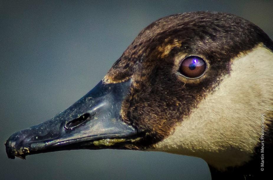 duck in the spotlight
