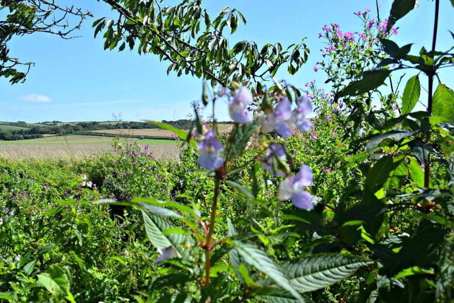 wild light purple flowers