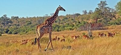 Wildlife Mingle