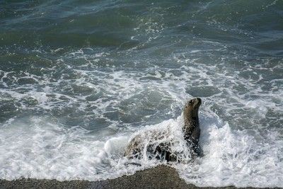 Sea lion wash