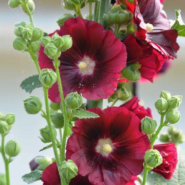 Flowers of Samos Island in Greece.