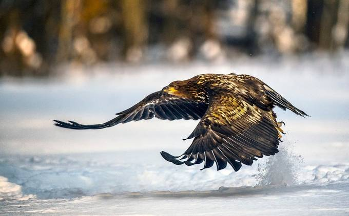 Controlled Flight... by Birmo - Animals In The Winter Photo Contest