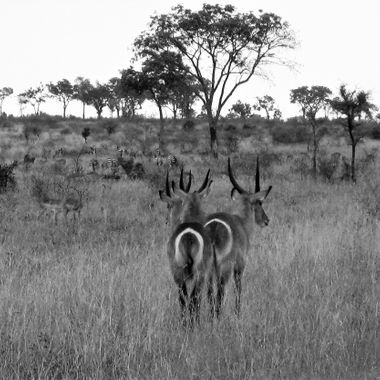 Taken in South Africa in Jan 2009