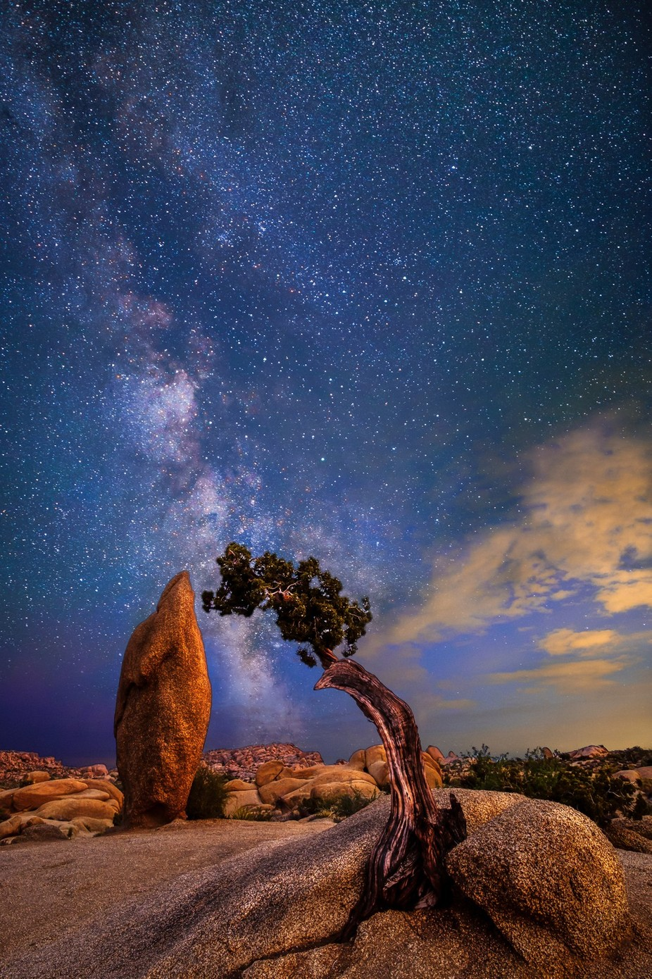 Joshua Tree by samuelroniger - Simply HDR Photo Contest