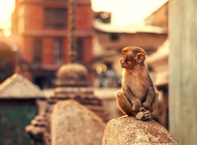Zen monkey by Ashrafularefin - Monkeys And Apes Photo Contest