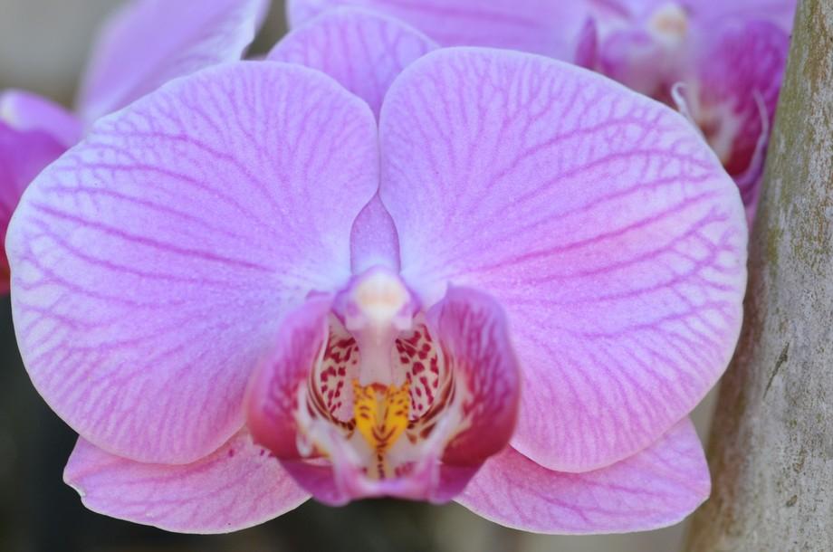 My-Garden-Orchid